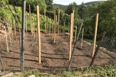 Erstes Ziel der Begehung: Terrasse am Robberg mit neu gepflanzten Reben.