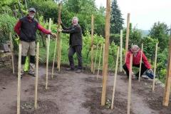 Die Hobbywinzer J. Mitschele, T. Börstler und R. Apell begutachten die Neupflanzung.Foto: Werner Bentz