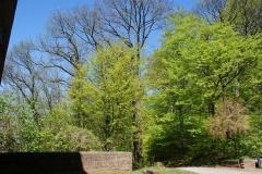 Der Frühling macht sich breit am Robberg mit einem zarten Grün.